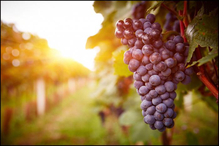 сува црвена вина