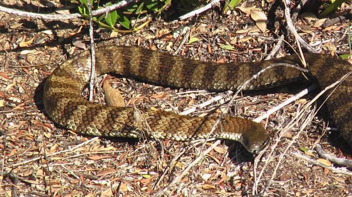 repeller serpente