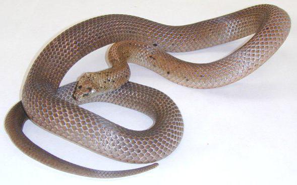repeller serpente fai da te