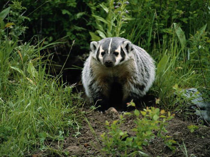 Zwierzęta rezerwatu Orenburg