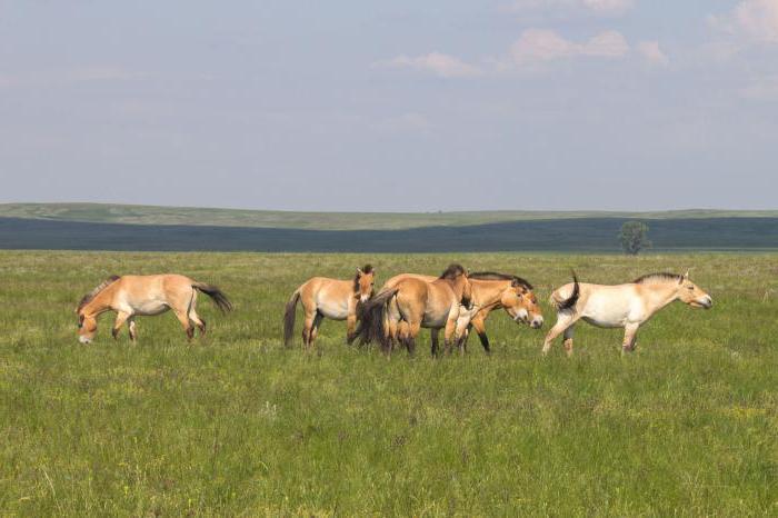 Státní přírodní rezervace Orenburg