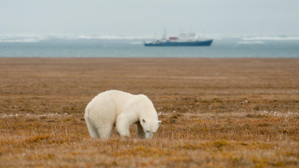Полярната мечка на фона на акваторията