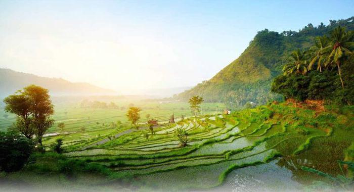 naselja Indonezije