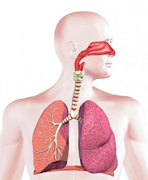 respirační systém