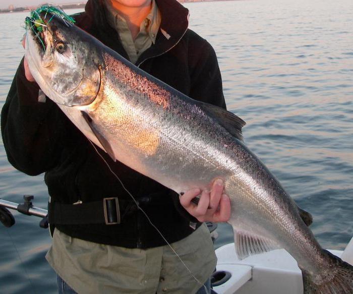 pesce fiume ufa