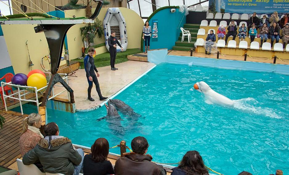 Rostov Dolphinarium