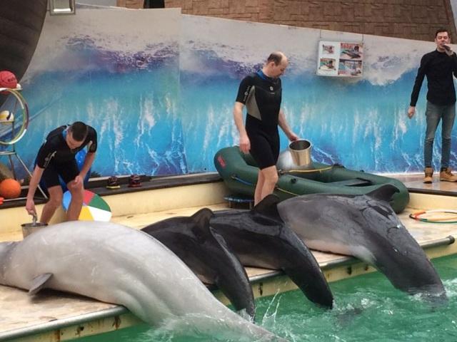 Indirizzo del delfinario di Rostov