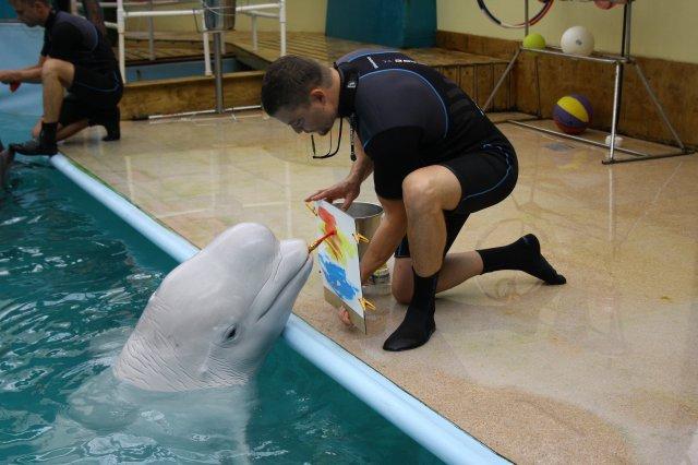 Orario di lavoro del delfinario di Rostov