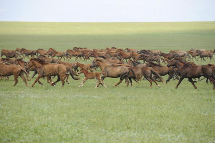 životinja iz rezervata Rostov