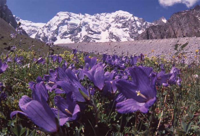 najvišja točka Rusije je gora