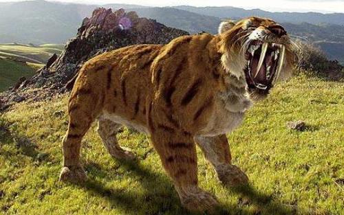 tygrysy szablastozębne