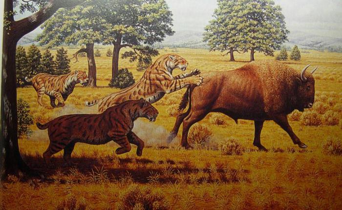 starożytny tygrys szablozębny