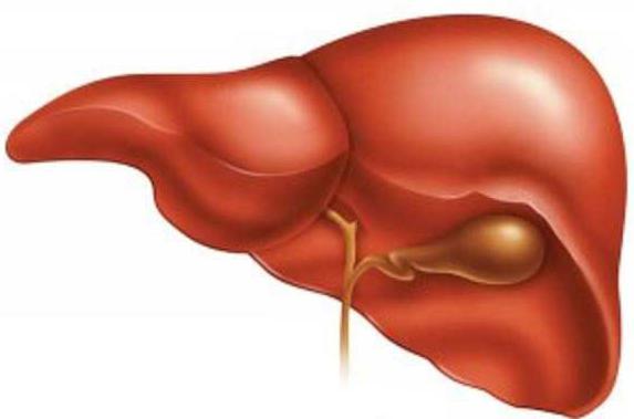 trattamento dei rimedi popolari del fegato