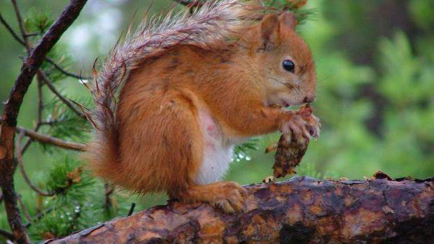 sałatka z wiewiórki