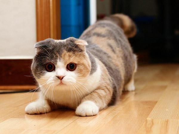 Piega il gatto