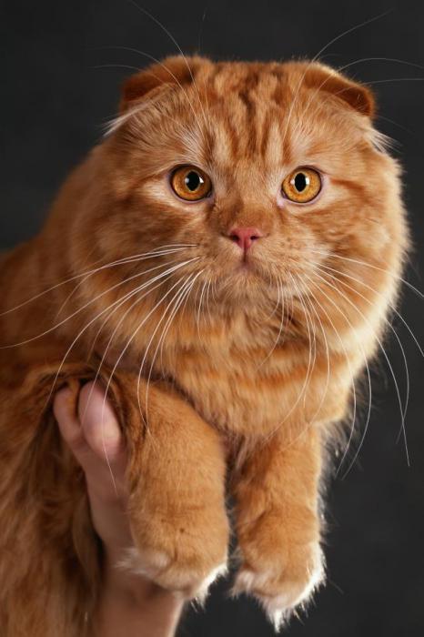 piega gatto Prezzo