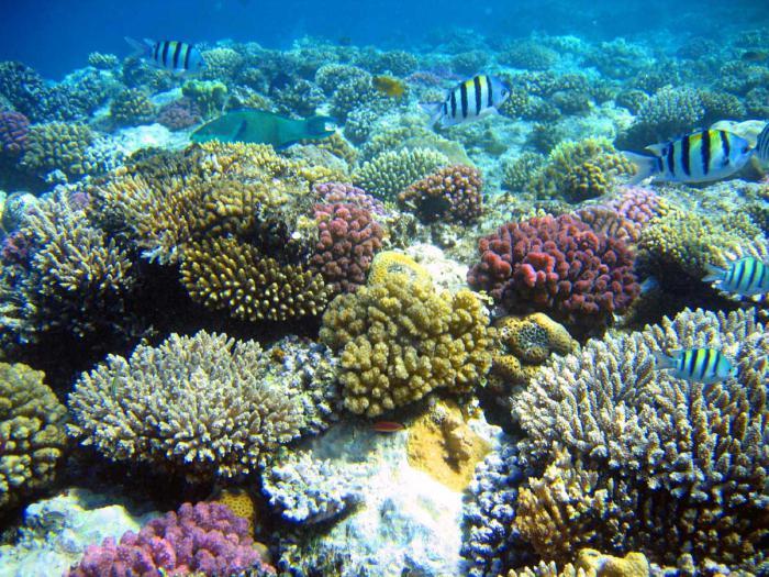 svijet morskih životinja