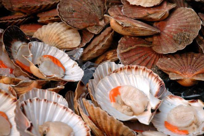 morske školjke što je to