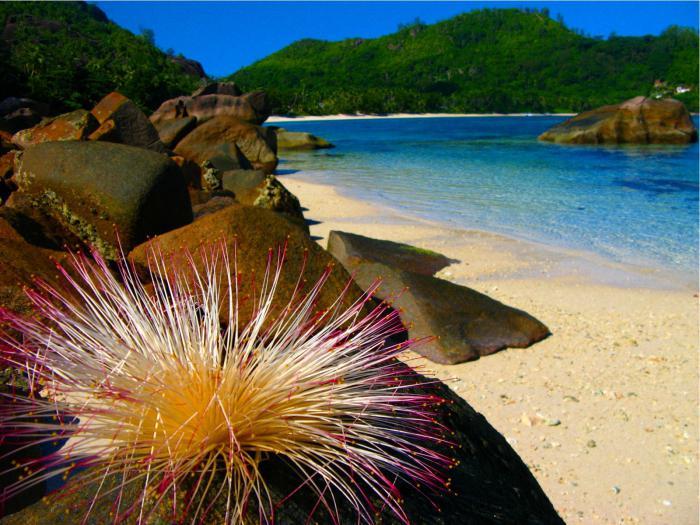 dove sono le seychelles