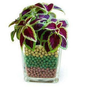 собне биљке које воле сенке