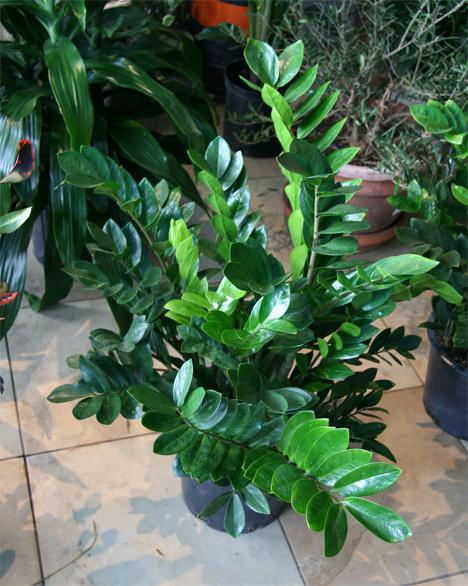Спољашња биљна листа са нијансама