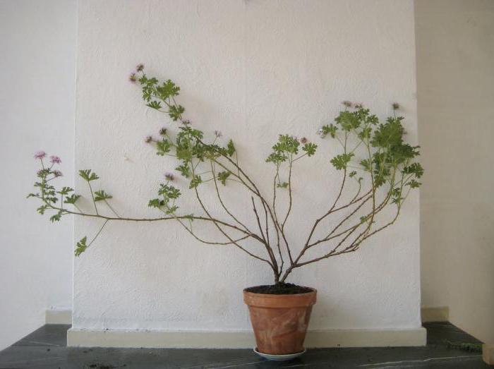 piante d'appartamento che amano l'ombra senza pretese