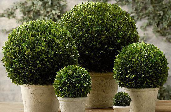 piante in vaso ricci