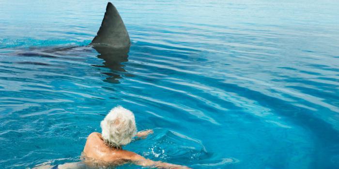 Attacco di squalo bianco
