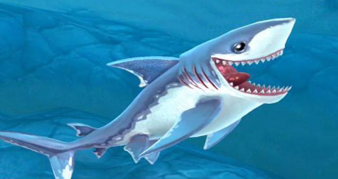 акули от херинга