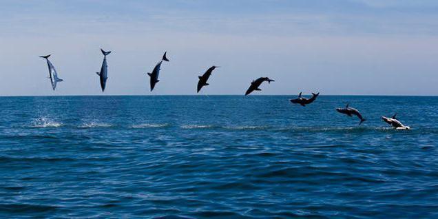 скоростта на акула мако
