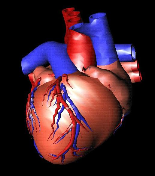 Ból w klatce piersiowej po naciśnięciu