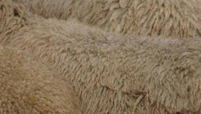 skóry owcze