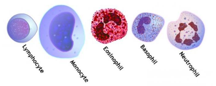 indeks pomaka leukocita