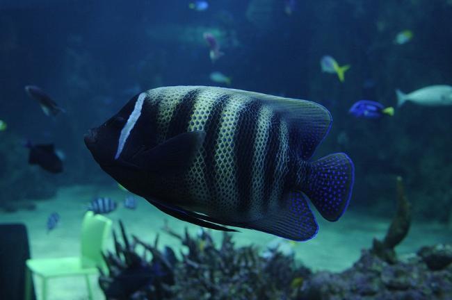 аквариум в Сидни