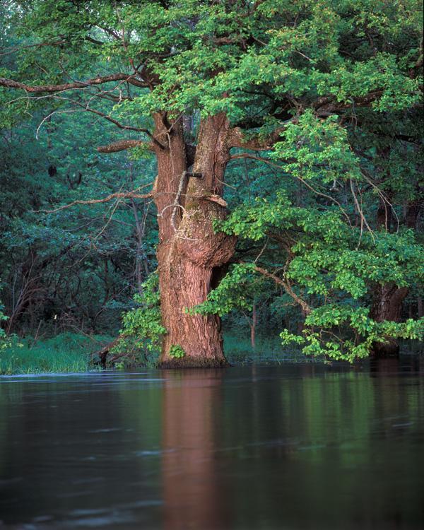 Брянска гора