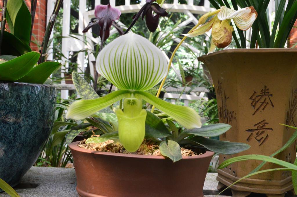 Ogród orchidei
