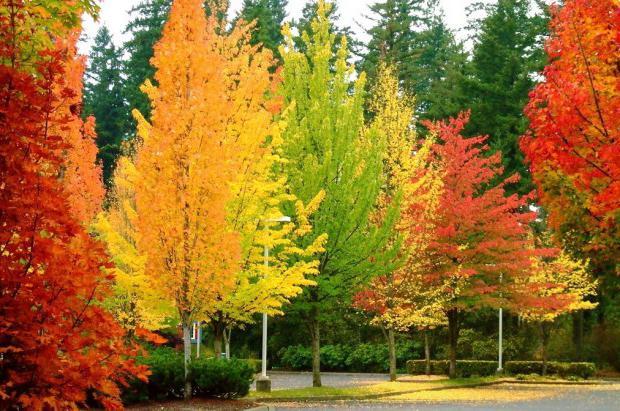 segni dell'autunno per i bambini