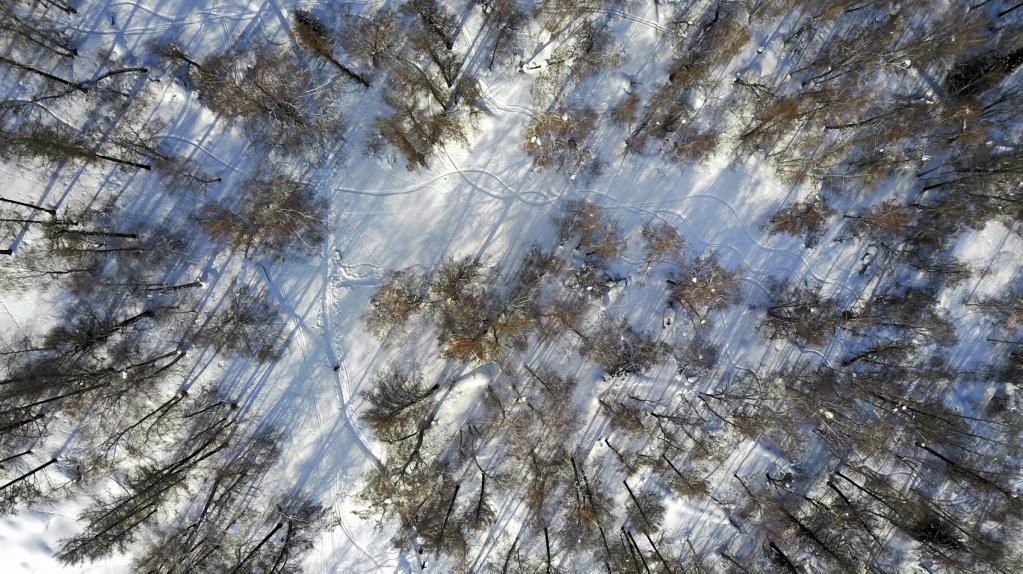 Следећа - живописна борова шума