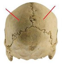 Struktura kosti lobanje