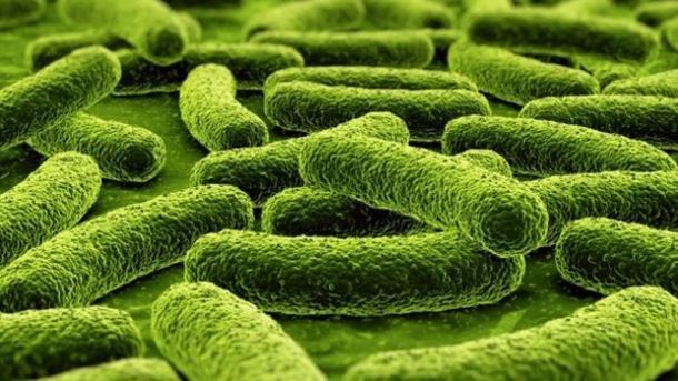 spori ugljikohidrati