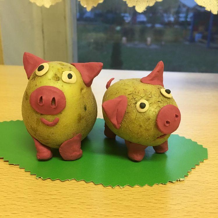свиње кромпира