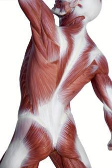 muscoli lisci