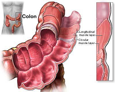 mimare i muscoli del tessuto muscolare liscio