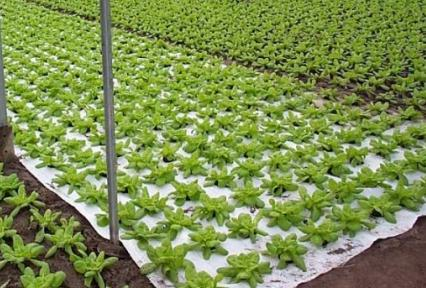 tkaniny agrotekcyjne tkane do ściółkowania gleby