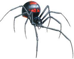 ragni in Russia