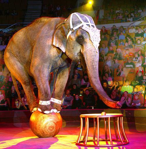 dvorana cirkusa u avtovu