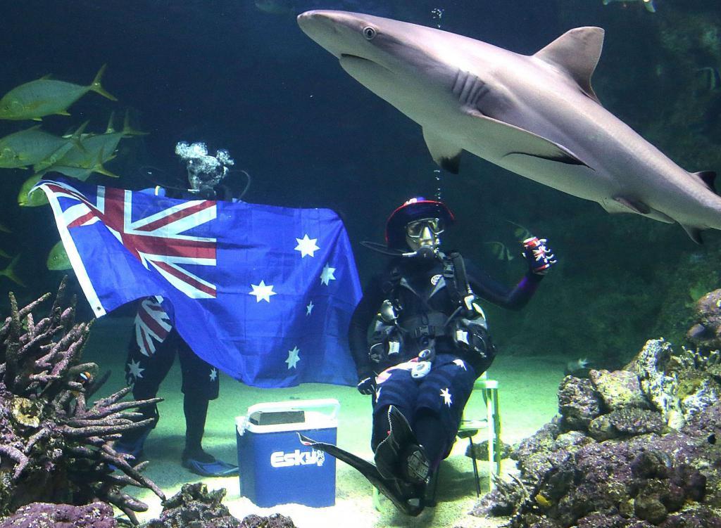 obilje mjesta za upoznavanje s ribama Australijom