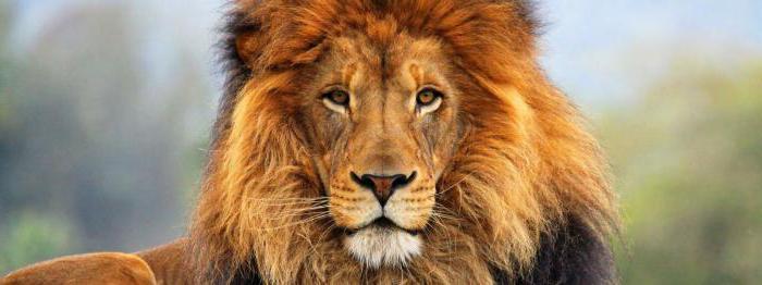 pietra di leoni nell'oroscopo