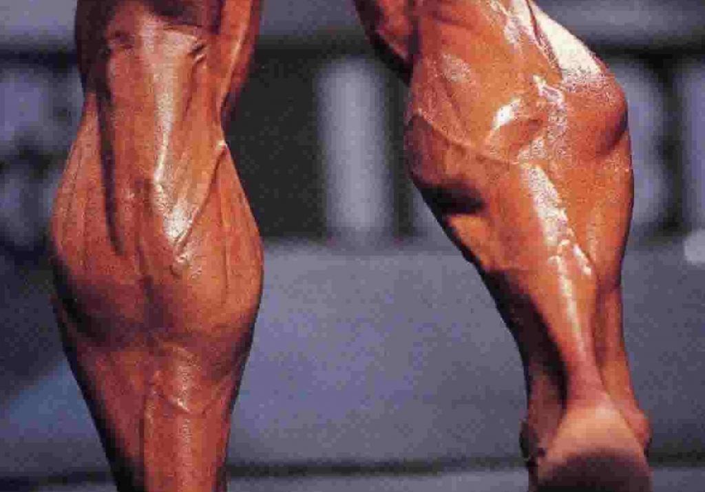 телесните мускули
