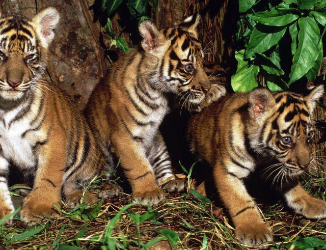 životinja otoka Sumatre